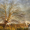 Towering Oak Barn Print by Benanne Stiens