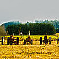 Tractors Ready Poster by Dale Stillman