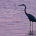 Treading Alone   Great Blue Heron  Poster by Jonathan Whichard