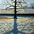Tree and Shadow Calke Abbey Derbyshire Print by Andrew Macara