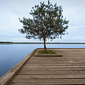 Tree On Jetty Poster by Billy Currie Photography