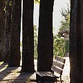 Trees and Bench Print by Jeremy Woodhouse
