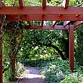 Trellised Walkway  Print by Deborah  Crew-Johnson