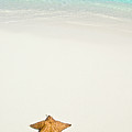 Tropical Beach And Starfish Print by Mehmed Zelkovic