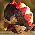 Tropical Mangosteen - The medicinal fruit Poster by Kaye Menner