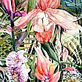 Tropical Orchids Print by Mindy Newman
