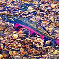Trout Stream Poster by Terril Heilman