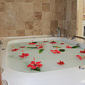 Tub of Hibiscus Print by Shane Bechler