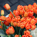 Tulips by Leslie Leda