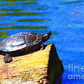 Turtle Basking In The Sun Print by Wingsdomain Art and Photography