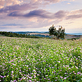 Tuscany Flowers Print by Brian Jannsen