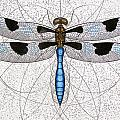 Twelve Spotted Skimmer Print by Charles Harden