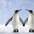 Two Penguins Holding Hands Print by Fuse