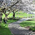 Under the cherry blossom tree Poster by Pierre Leclerc Photography
