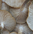 Underside Of Mushrooms Poster by Greg Adams Photography
