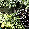 Variety of Fresh Vegetables - 5D17828 Poster by Wingsdomain Art and Photography