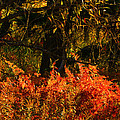 Vibrance of Fall Poster by Paul St George
