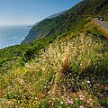 View From the Pacific Coastal Highway Print by Steven Ainsworth