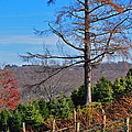 Vineyard in Fall Poster by Peter  McIntosh
