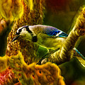 Visions of a Blue Jay Print by Bill Tiepelman