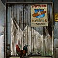 Waiting for Watson Print by Doug Strickland
