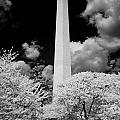 Washington Monument During Cherry Blossom Festival in Infrared by Carol M Highsmith