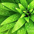 Wet Foliage Print by Carlos Caetano