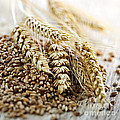 Wheat ears and grain Print by Elena Elisseeva