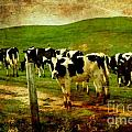 When The Cows Come Home . Photoart Poster by Wingsdomain Art and Photography