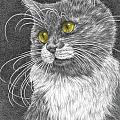 Whiskers - Color Tinted Art Print Poster by Kelli Swan