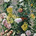 White and Yellow Chrysanthemums Poster by Gustave Caillebotte