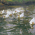 White Ducks on Water Poster by Franz Grassel