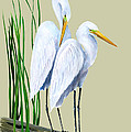 White Egrets and White Lillies Poster by KEVIN BRANT