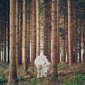 White Horse In The Wood Poster by Julia Davila-Lampe