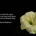 White Lily In The Dark Inspirational Poster by Ausra Paulauskaite