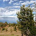 Whitebark Pine trees Overlooking Crater Lake - Oregon Print by Christine Till