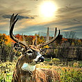 Whitetail Dawning Print by Emily Stauring