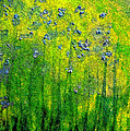 Wildflower Impression by jrr Print by First Star Art
