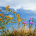 Wildflower Weed Poster by Tamyra Ayles