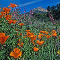 Wildflower Wonderland Print by Kathy Yates