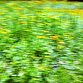 Wildflowers and Wind 2 Print by Skip Nall