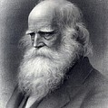 William Cullen Bryant 1794-1878 Was An Poster by Everett