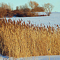 Winter Breeze Print by Aimee L Maher Photography and Art