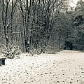 Winter Bridleway Print by Andy Smy