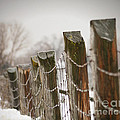 Winter fence Print by Sandra Cunningham