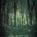 Winter forest at twilight Poster by Sandra Cunningham