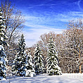Winter forest with snow Poster by Elena Elisseeva