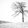 Winter in Black and White Print by David Waldrop