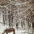 Winter scene with horse grazing in wooded pasture Print by Sandra Cunningham