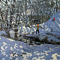 Winter Stream Print by Andrew Macara